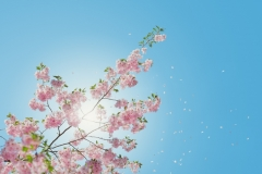 Weather-Gallery-First-Bloom