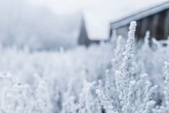Weather-Gallery-Frost