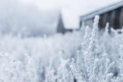 Weather Gallery - Frost